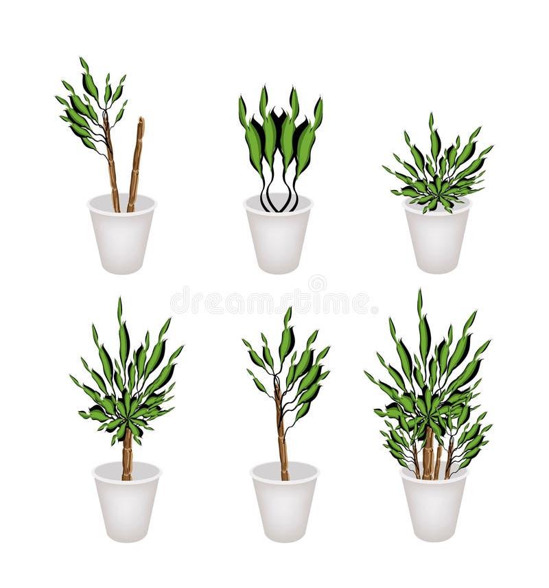Yucca-Baum Oder Dracaena-Anlage In Einem Blumen-Topf Vektor ...
