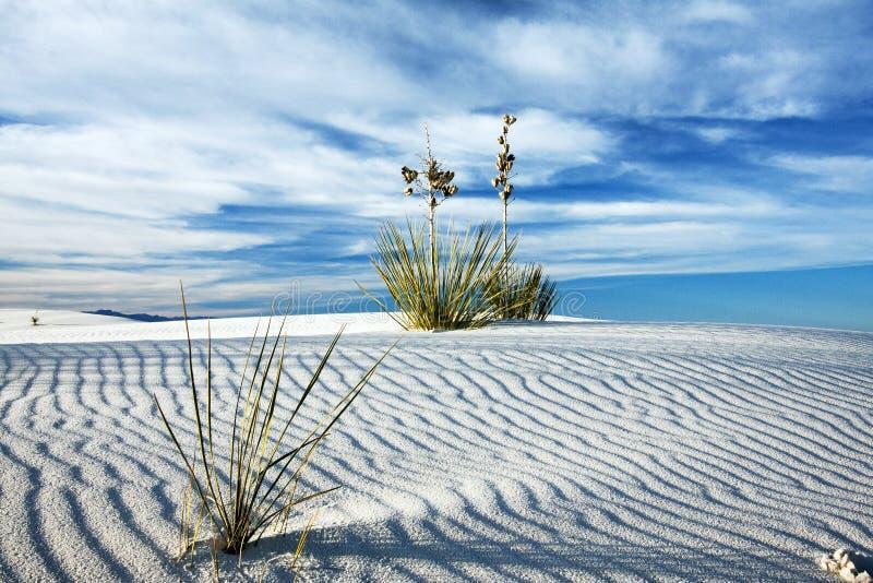 Yucca im weißen Sand am Weiß versandet das Nationaldenkmal, neu ich lizenzfreies stockfoto