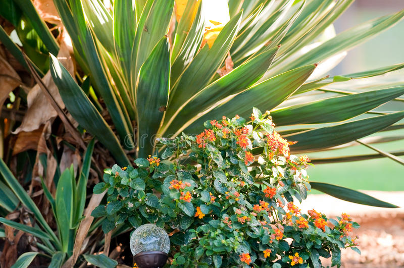 Garden Of Green And Orange Lantana And Yucca Plants.