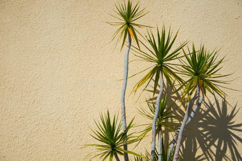 Yucca met schaduwen stock foto