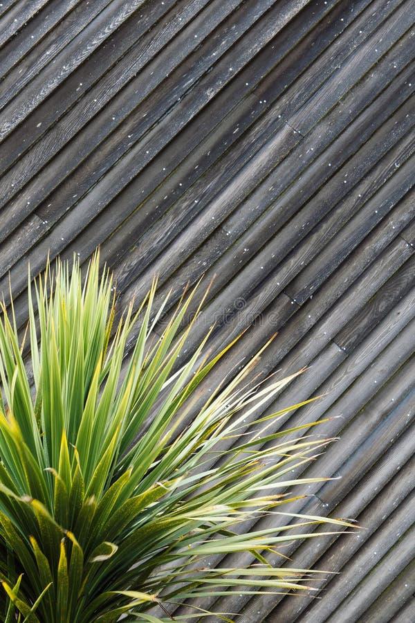 Yucca- oder Kaktuspflanzezusammenfassung mit diagonalen Planken des Holzes in t stockfotografie