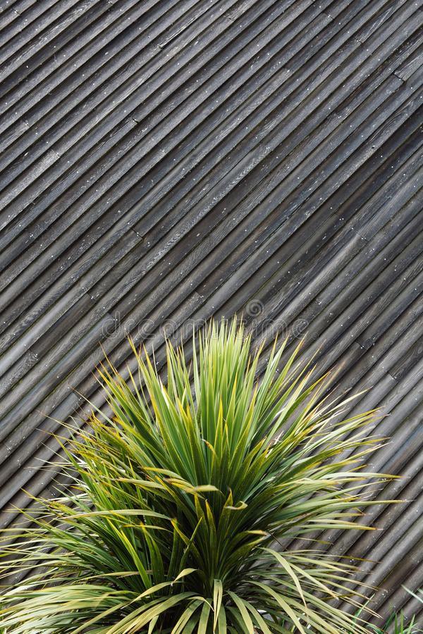 Yucca- oder Kaktuspflanzezusammenfassung mit diagonalen Planken des Holzes in t lizenzfreie stockfotos