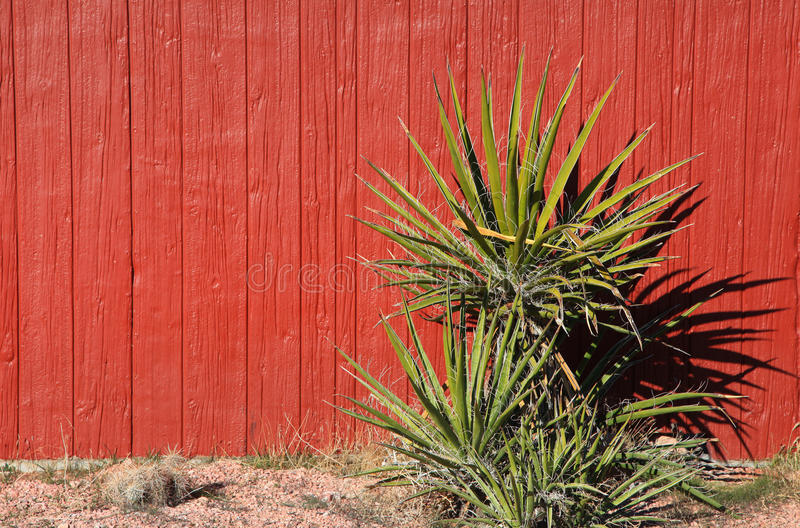 Download Yucca Plant Royalty Free Stock Photography - Image: 28541797
