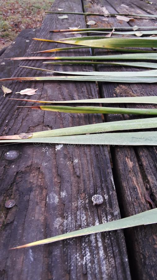 Yucca plant spikes green succulent wooden wood table rustic picnic bench outdoors texture wet mossy stock photos