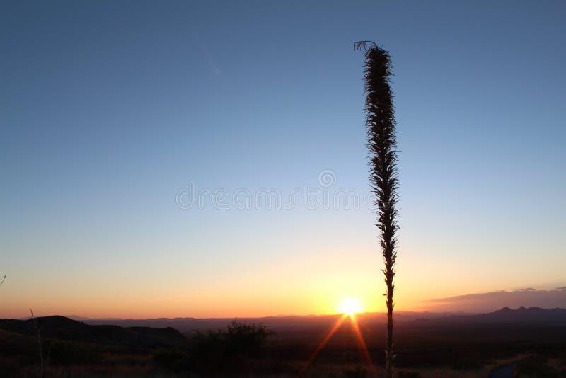 Yucca sunset royalty free stock image
