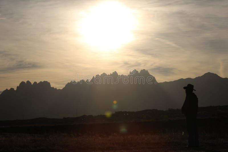 Yucca sunset stock image
