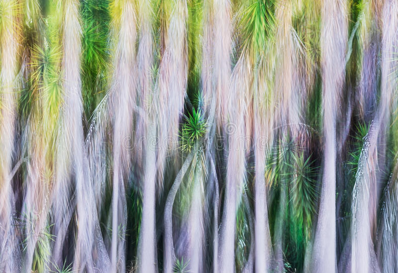Yucca Tree Abstract stock image