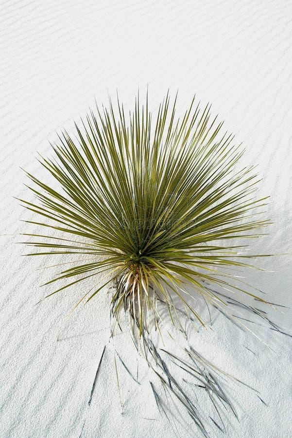 Yucca und weiße Sande lizenzfreie stockbilder