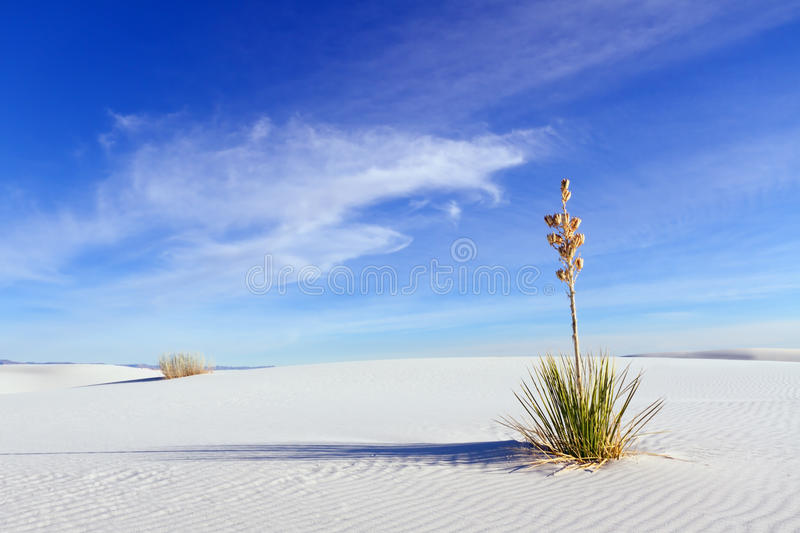 Download Yucca at White Sands stock image. Image of sand, blue - 28226695