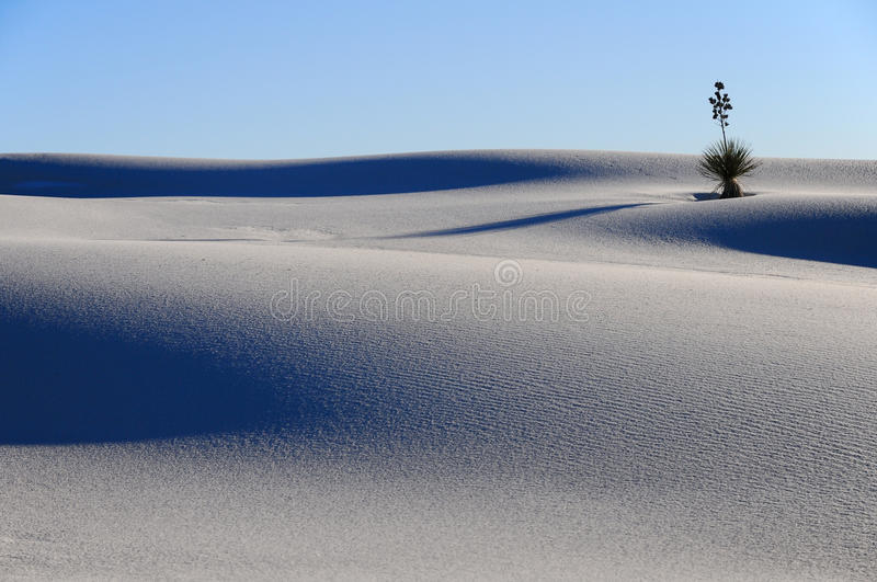 Download Yucca In The White Sands Dune Stock Image - Image: 26524831