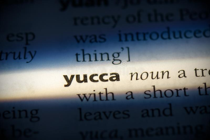 Yucca stock fotografie