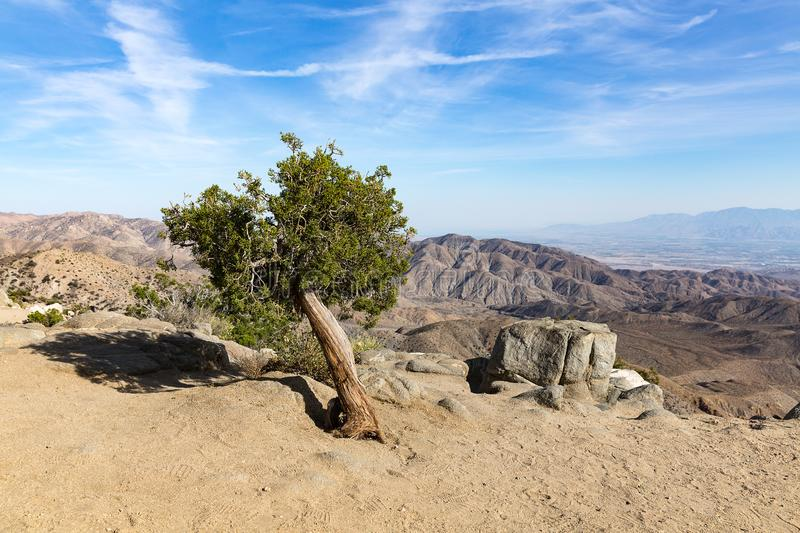 Yuccapalm in Joshua Tree National Park, San Andreas Fault, Cali stock afbeelding