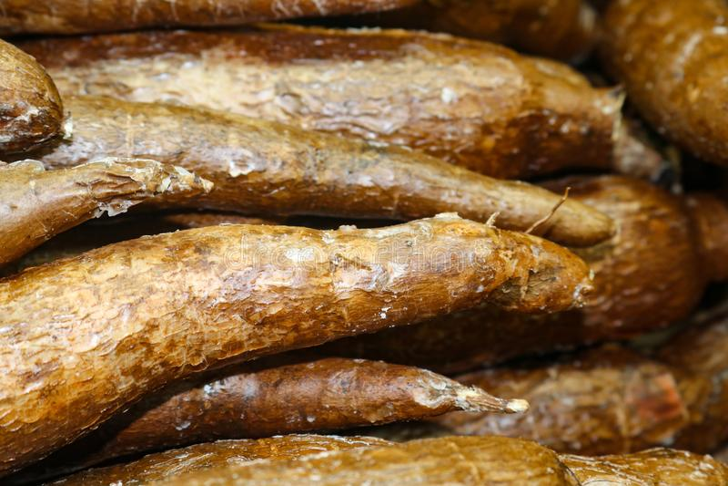 Yuccawurzel oder -Manihot essbar oder -manioka - eine Lebensmittelheftklammer benutzt beim Kochen im Mexikaner und in anderen Kul lizenzfreies stockbild
