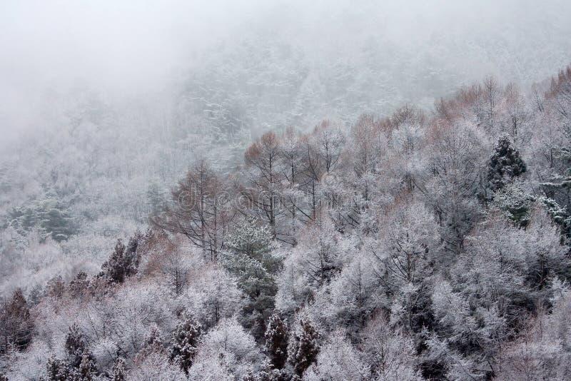 Yudanaka, Japan. In de winter; , in winter stock image