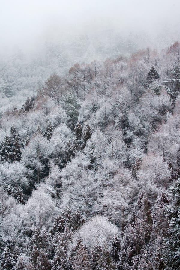 Yudanaka, Japan. In de winter; , in winter stock photos