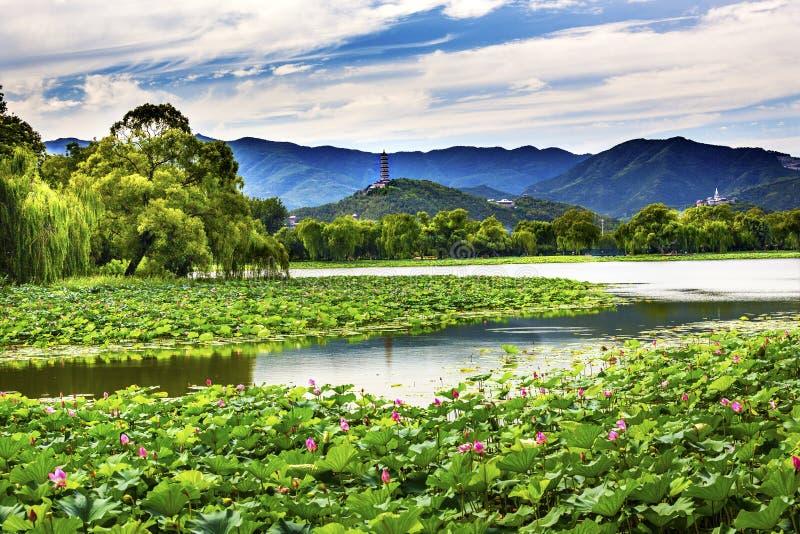 Yue Feng Pagoda Lotus Garden Summer-Paleis Peking China stock foto