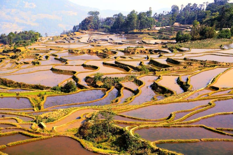 Yuenyang Hani Terrace em Yunnan, China fotografia de stock