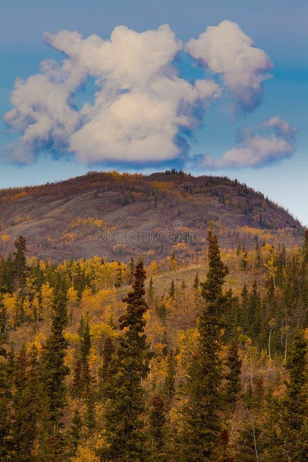 Download Yukon Gold - Fall In Yukon Territory, Canada Stock Photo - Image: 17149474