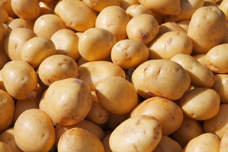 Yukon Gold Potatoes royalty free stock photo