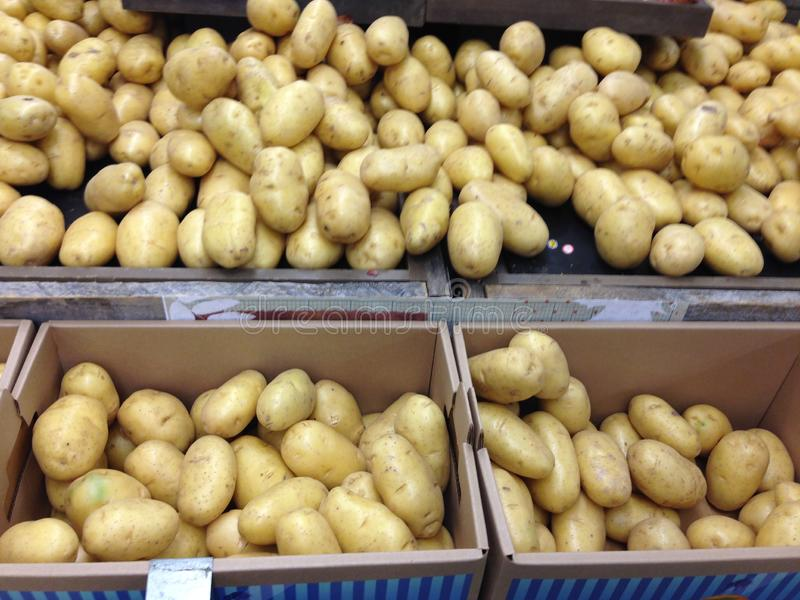 Yukon Gold potatoes in bin at grocery store stock photography