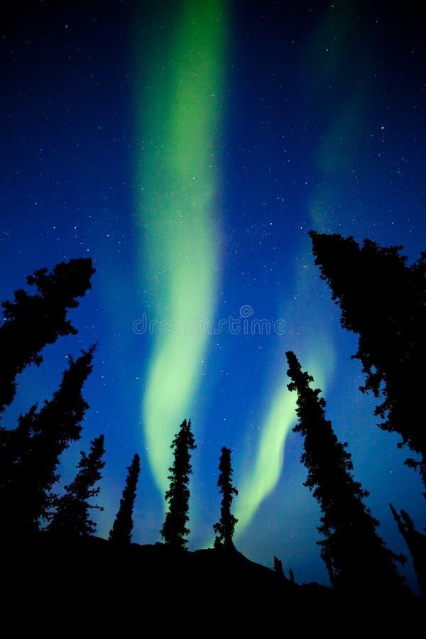 Yukon taiga spruce Northern Lights Aurora borealis stock image