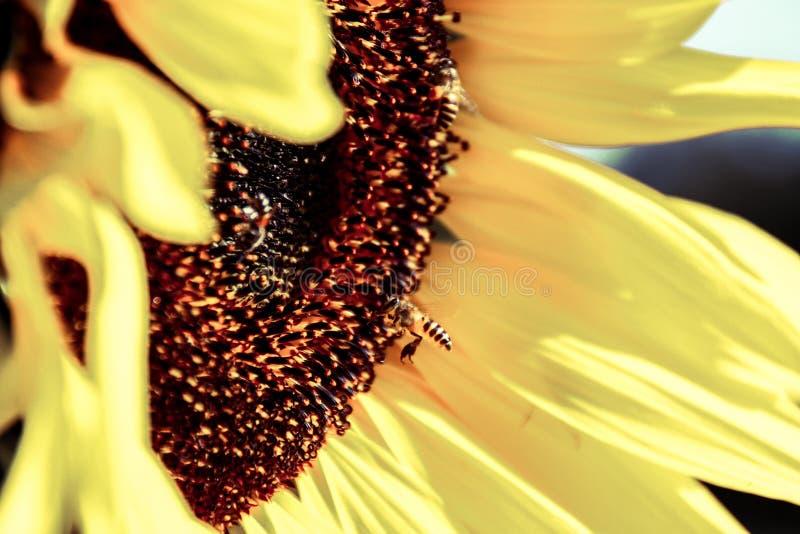 Yummy мед стоковые изображения