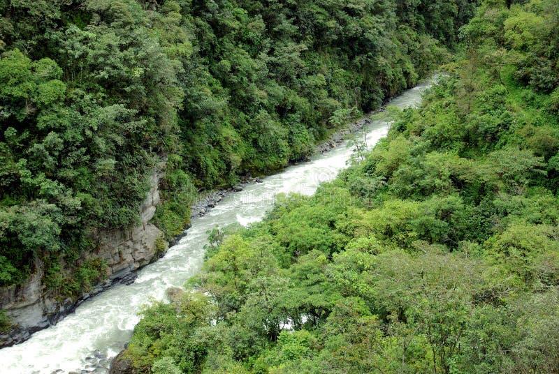 Yungas, Bolivia fotos de archivo libres de regalías
