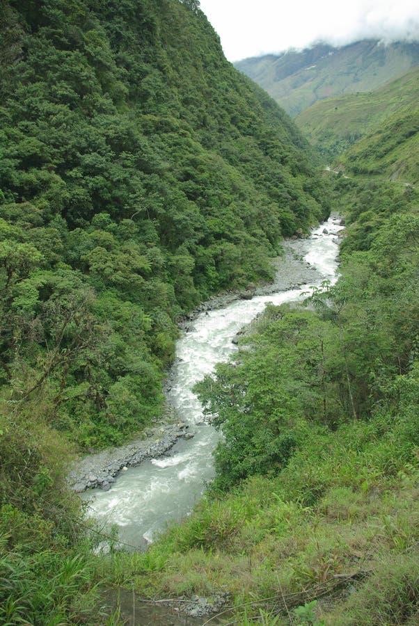 Yungas, Bolivia fotografía de archivo libre de regalías