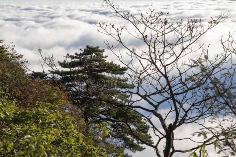 Yunhai Huangshan sceniskt område, Kina royaltyfri bild