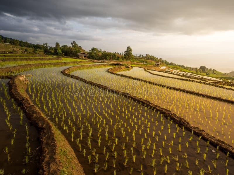 Yunnan Kina solnedgång arkivbild