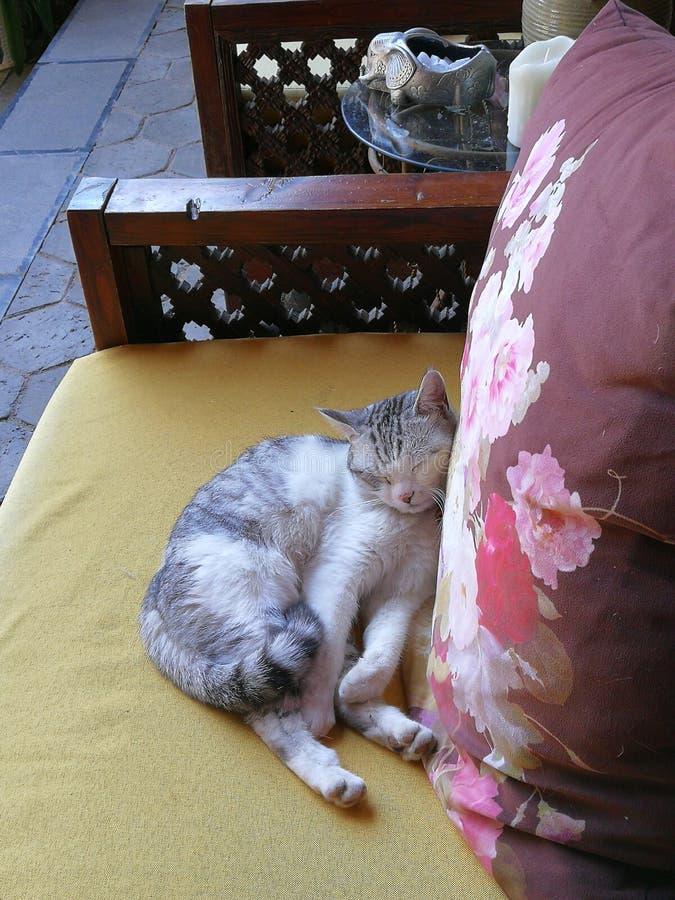 Yunnan Lijiang China Sleeping Cat Kitten Deep Sleep Day Dreaming royalty free stock images