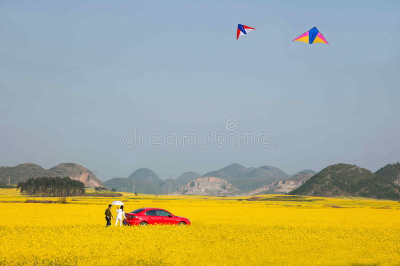 Yunnan Luoping canola flower on a small patch of flowers Bazi stock images