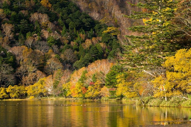 Yunoko sjö i höst arkivbilder