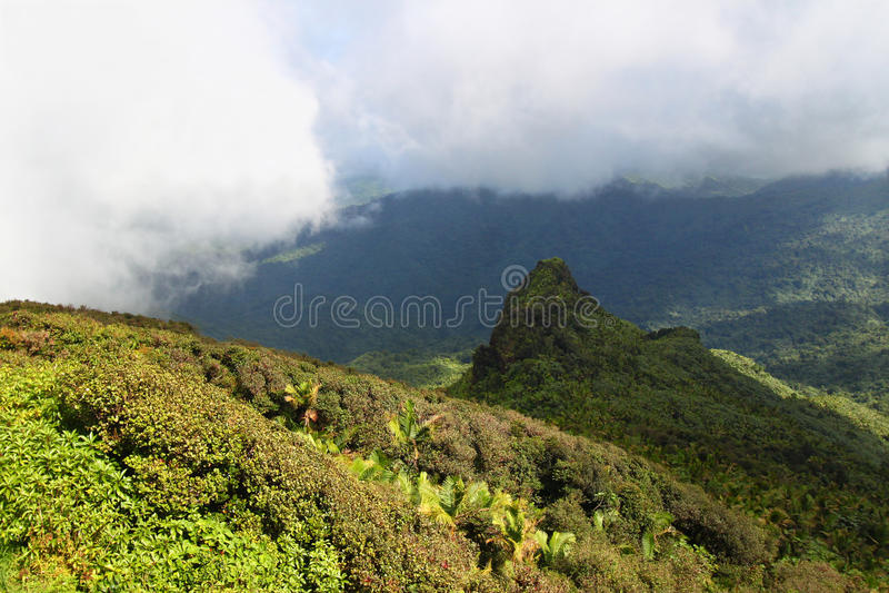 yunque för el-skognational royaltyfri foto