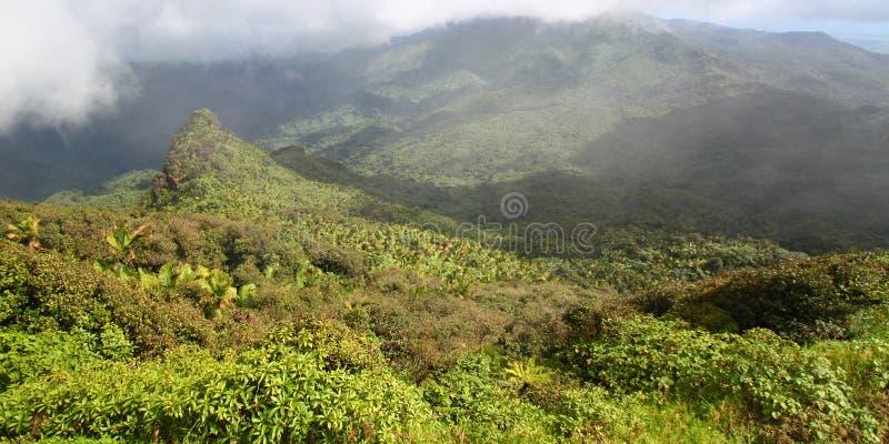 yunque rico дождевого леса puerto el стоковое изображение rf