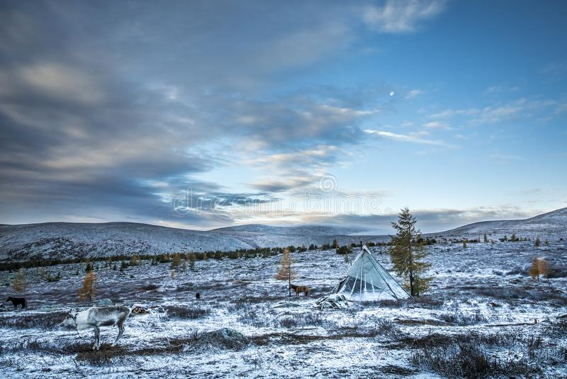 Yurt da família de Tsaatan em uma paisagem de Mongólia do norte imagem de stock royalty free