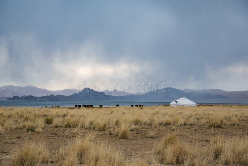 Yurt i mongoliskt landskap royaltyfria foton