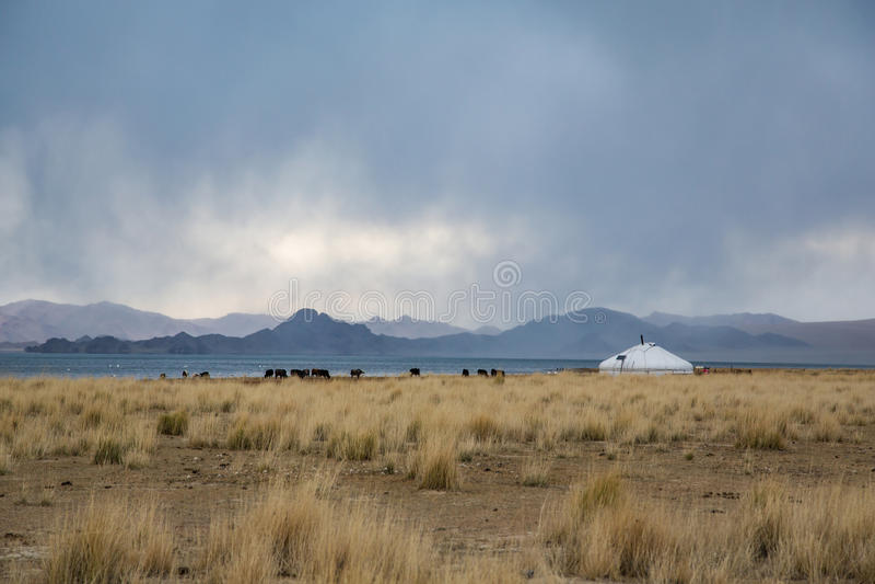 Yurt in Mongools landschap royalty-vrije stock foto's