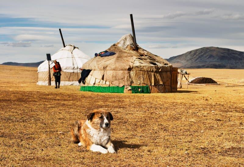 Yurta en desierto mongol fotos de archivo libres de regalías