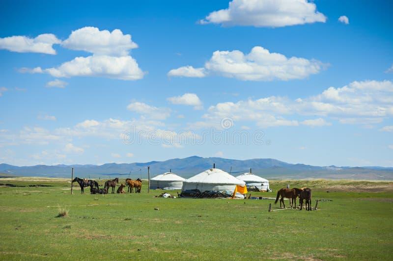 Yurts和马在蒙古 图库摄影