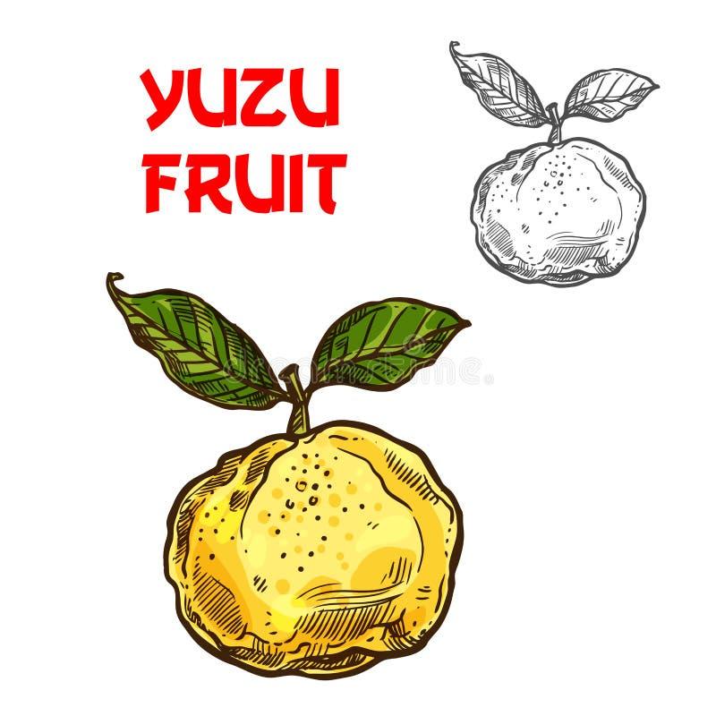 Yuzu vector sketch citrus fruit cut icon royalty free illustration