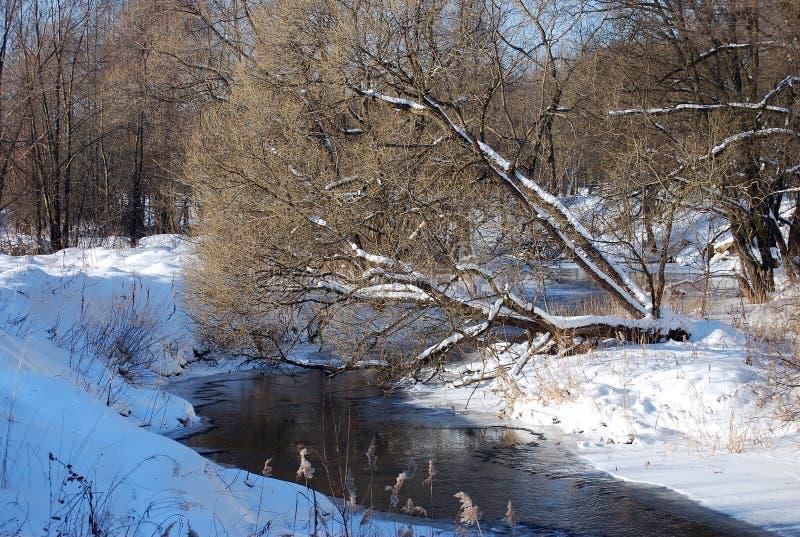 Yves drzewo ja pochylał nad małą rzeką z silnym prądem Zima pogodny mroźny dzień outdoors obraz stock