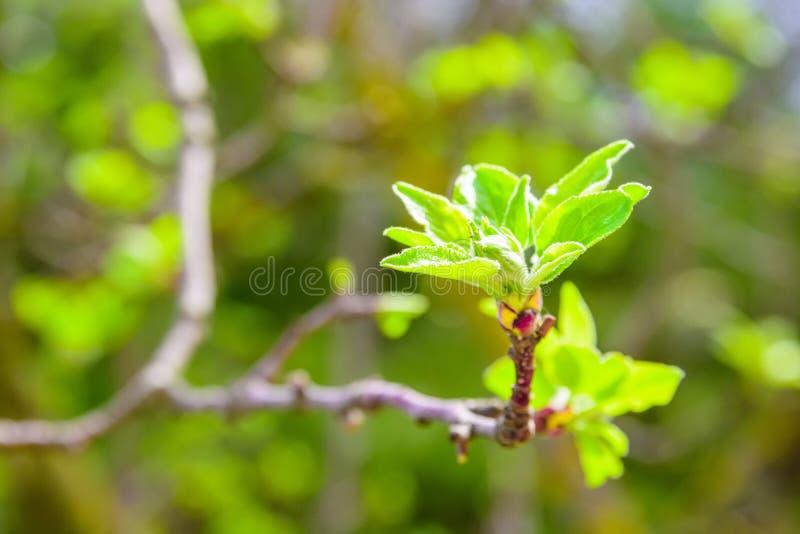 Żywi potomstwo zieleni liście fotografia stock