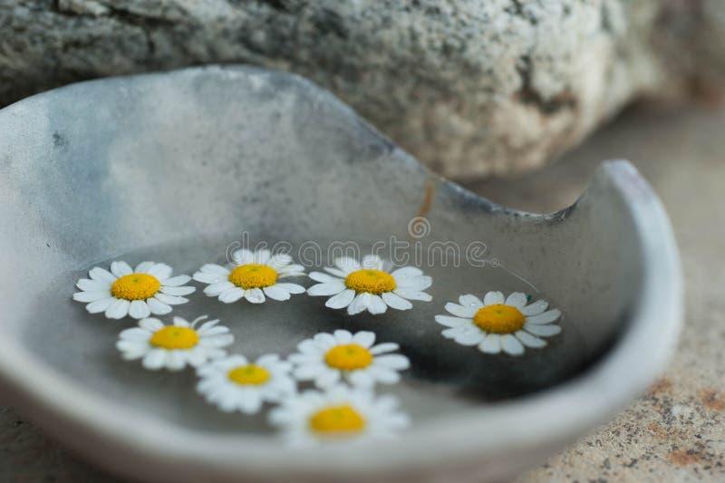 ?ywio?owa kwiatu Wellness medytacja obraz stock