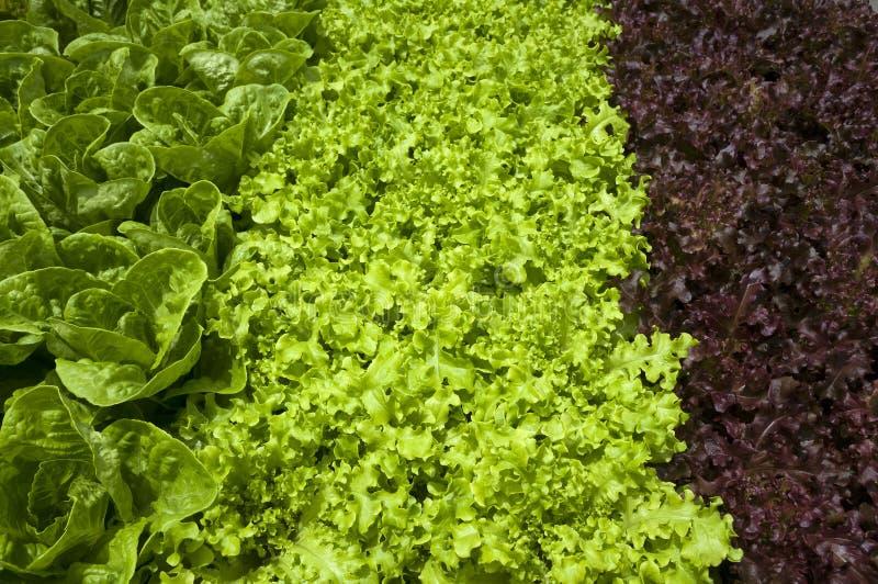 Żywność organiczna obrazy royalty free