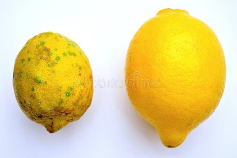 Żywność organiczna versus gmo jedzenie: cytryny fotografia stock