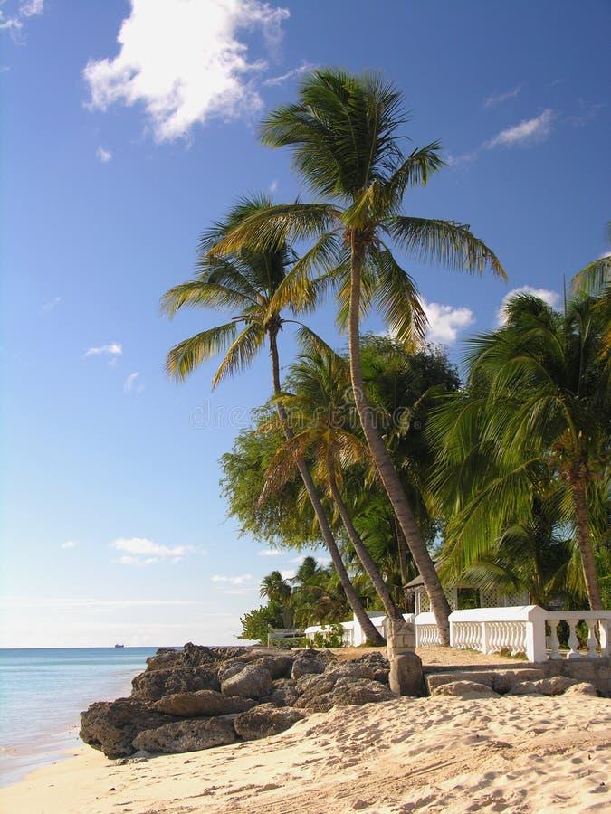 Download żywych paradies zdjęcie stock. Obraz złożonej z piasek - 127518