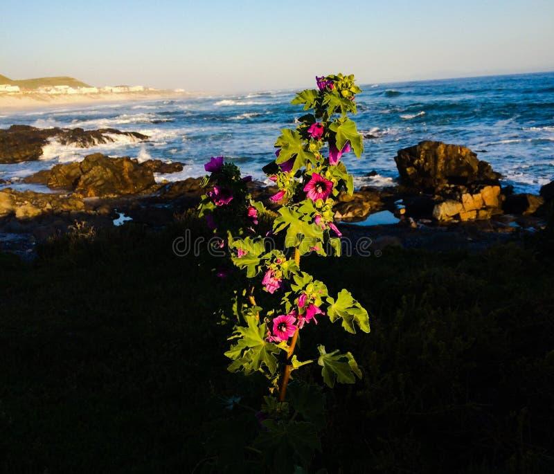 Yzerfontein南非 库存照片