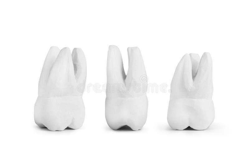 Zähne hergestellt vom Gips stockfoto
