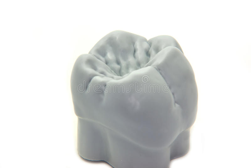 Zähne - Molar lizenzfreie stockfotografie